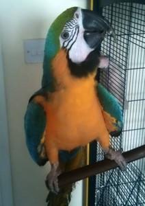 Условия за отглеждане на папагали