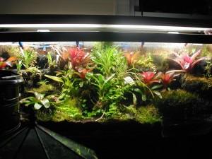 Растения за терариум