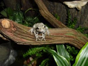 Терариум за дървесни жаби