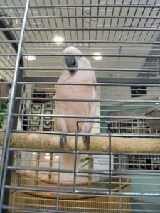 Отглеждане на папагали в кафез