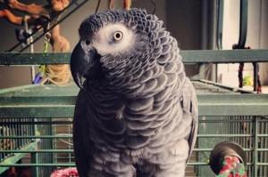Закон за защита на папагалите