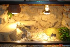 Скален терариум за гекони