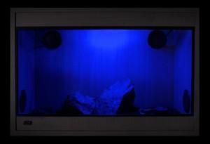 Осветление в терариум