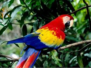 Биотоп за папагалите
