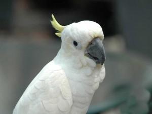 Закони за отглеждането на папагали