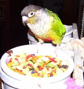 Хранене на папагалите