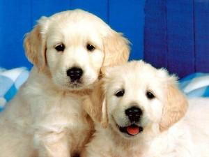 Мъжко или женско кученце