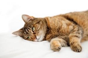 Болести при котката