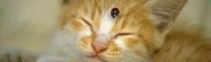 Паразитни болести при котките