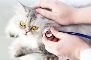 пикочната система на котките