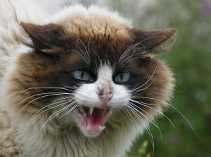 Конфликтни ситуации при котките