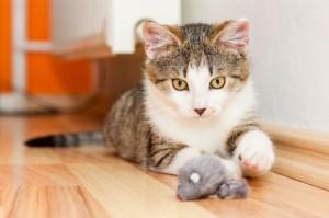 Поведение на котката