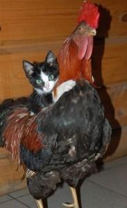 Котка и други животни