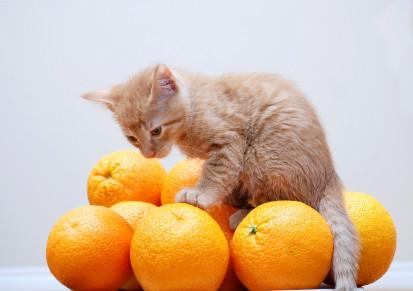 Витамини и минерали за котките