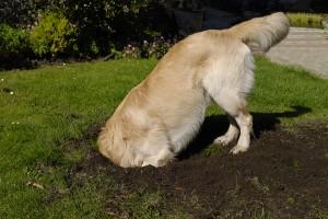 Поведение на кучето