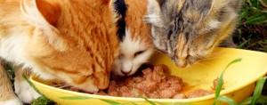Минерални вещества за котката