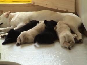 Бозаене при кучетата