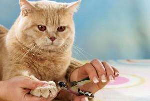 Грижи за ноктите на котката