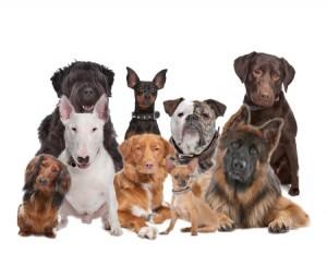 кучешките породи