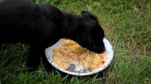 Хранене на малкото куче