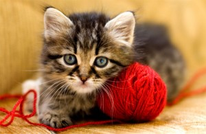 Игра с котката