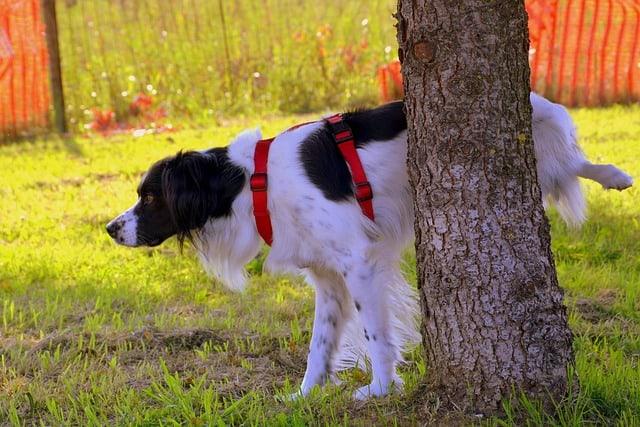 Маркиращо куче