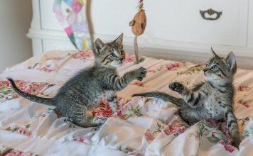 Играещи котенца