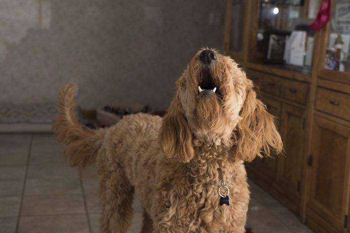 Куче сигнали