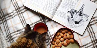 Правилно хранене на котка
