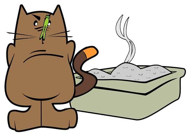 Котешката тоалетна трябва да се поддържа чиста